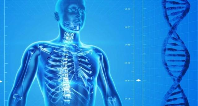El calcio es indispensable para que funcionen bien los músculos, el corazón y los nervios. La falta de calcio es la principal causa de osteoporosis.