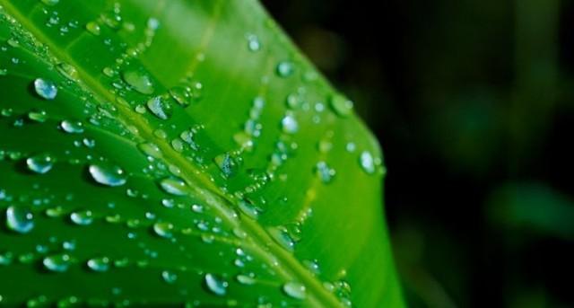 Componente vital de las plantas y algas con múltiples efectos benéficos en la salud.