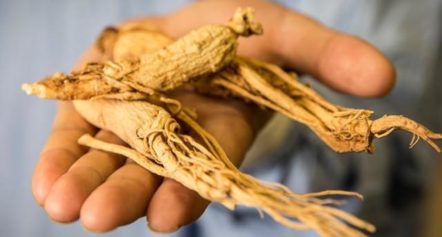 Los principios activos del ginseng son los ginsenósidos contenidos en la raíz.