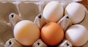 El huevo y el alto colesterol, un mito derribado.