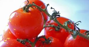 Los tomates contienen licopeno, un carotenoide que les aporta su color rojo característico.