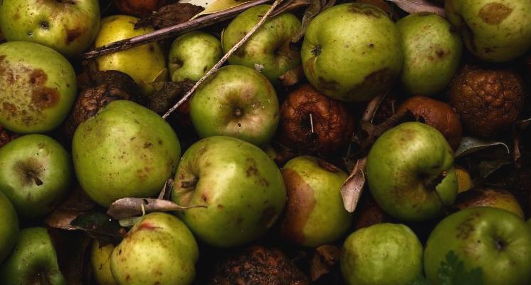 alimentos-descomposicion | Alimentación Sana